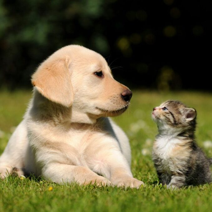 Puppies-and-kittens-1024x680